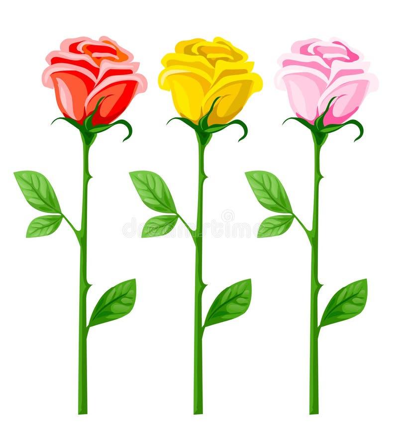 Tre fiori di rosa di vettore isolati su bianco royalty illustrazione gratis
