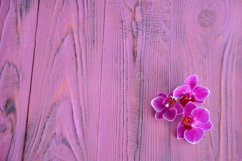 Tre fiori luminosi dell'orchidea sullo scrittorio rosa fotografia stock
