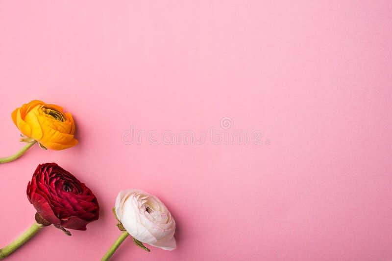 Tre fiori variopinti su un fondo rosa Copi lo spazio immagini stock