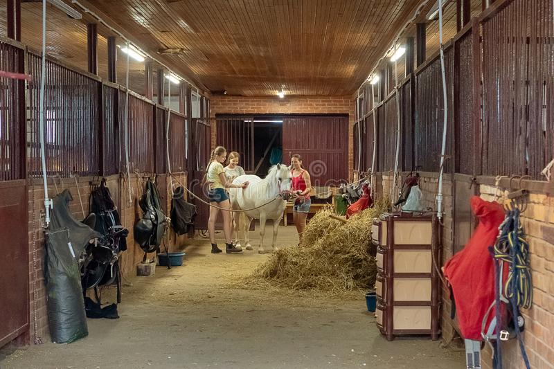 Tre flickor slår en vit häst i ett stall royaltyfri foto