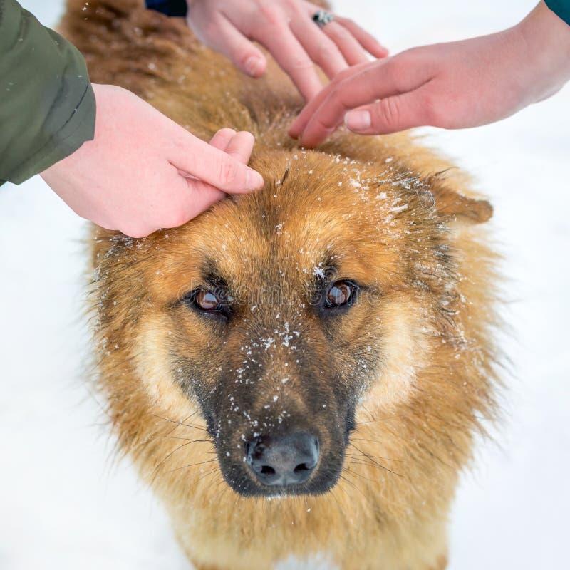 Tre flickor smeker den röda hunden Förälskelse till djur Folket och djur är friends_ arkivfoto