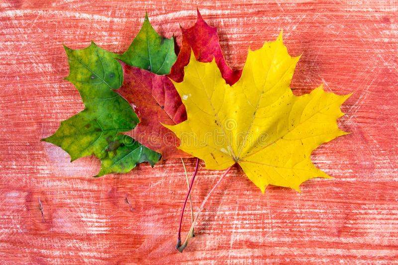 Tre foglie di autunno colorate fotografie stock libere da diritti