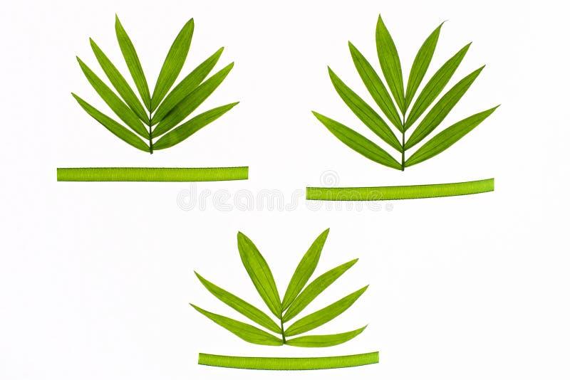 Tre foglie tropicali con i nastri fotografia stock libera da diritti