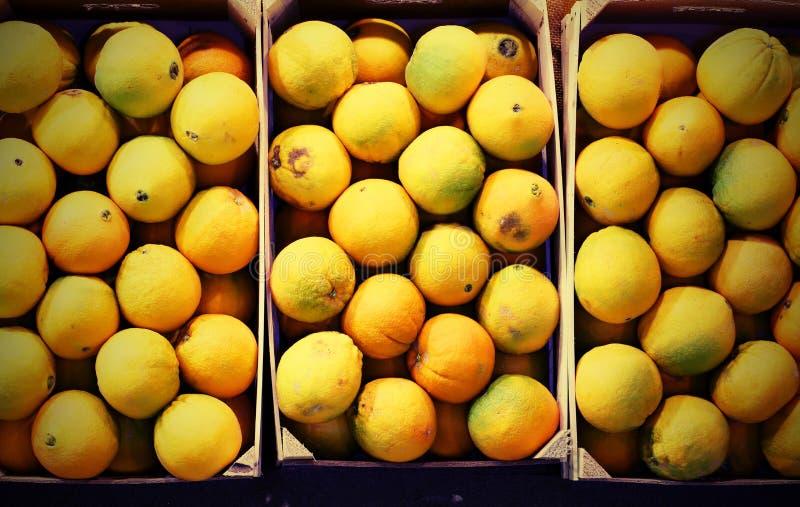 tre fruktaskar med citrusfrukter som påbörjar från fruktträdgårdar I royaltyfri foto