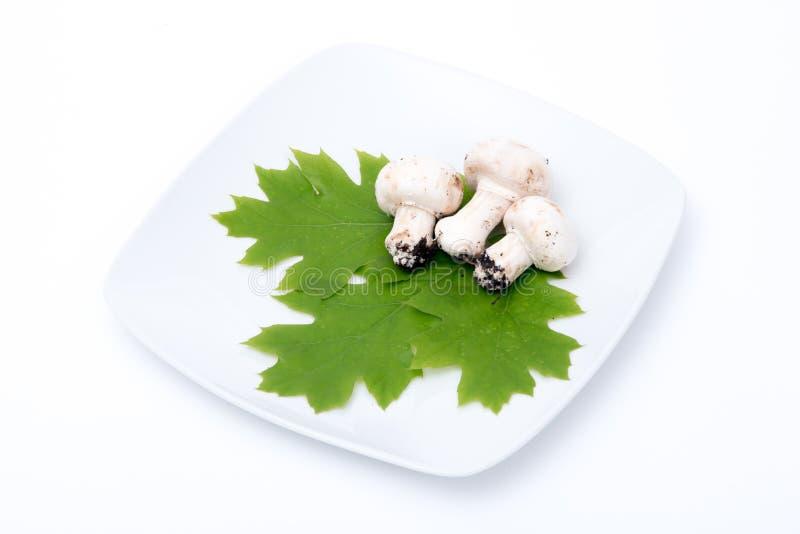 Tre funghi bianchi immagine stock