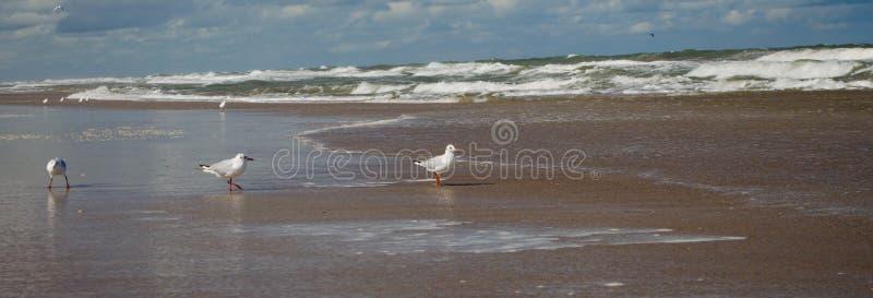 Tre gabbiani sulla spiaggia immagine stock libera da diritti