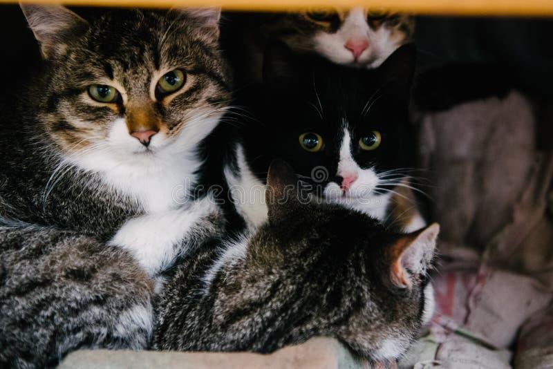 Tre gatti esaminano l'obiettivo fotografia stock