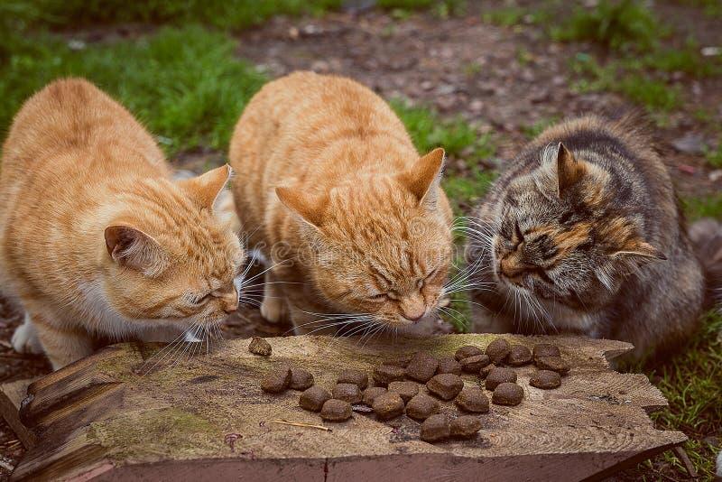 Tre gatti mangiano con piacere fotografia stock libera da diritti