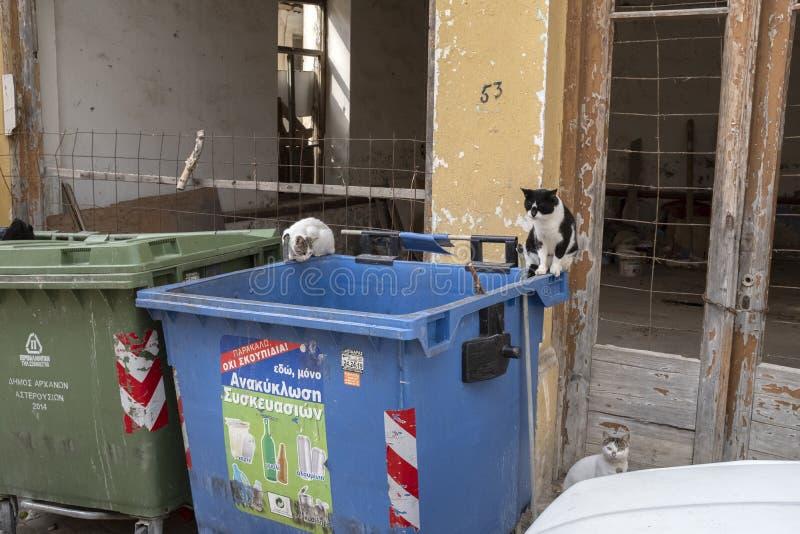 Tre gatti selvaggi nella città di Archanes, Creta immagini stock