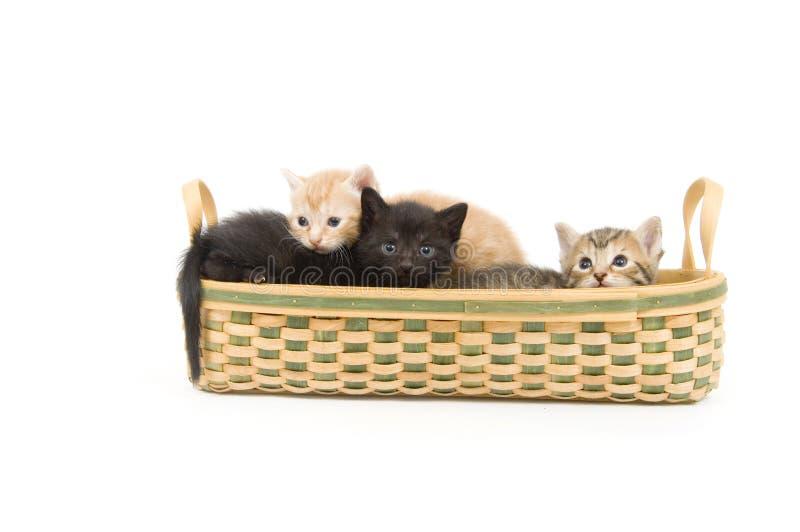 Tre gattini in un cestino immagini stock