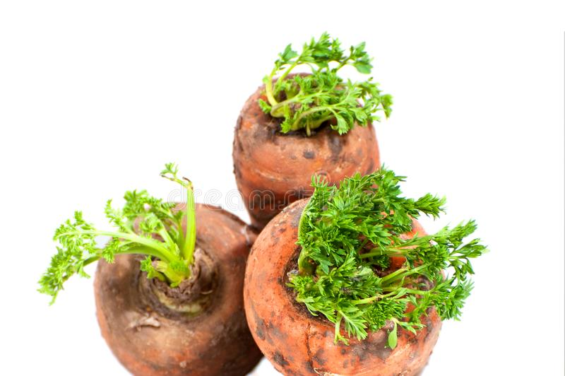 Tre giovani fresco-carote con cime immagine stock