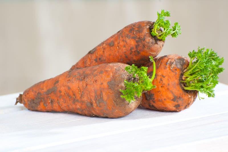 Tre giovani fresco-carote con cime su una fine di legno della tavola immagine stock