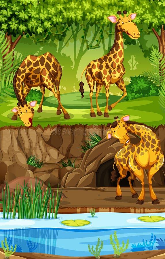 Tre giraff i djungel stock illustrationer