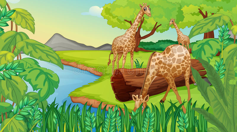 Tre giraff på flodstranden stock illustrationer