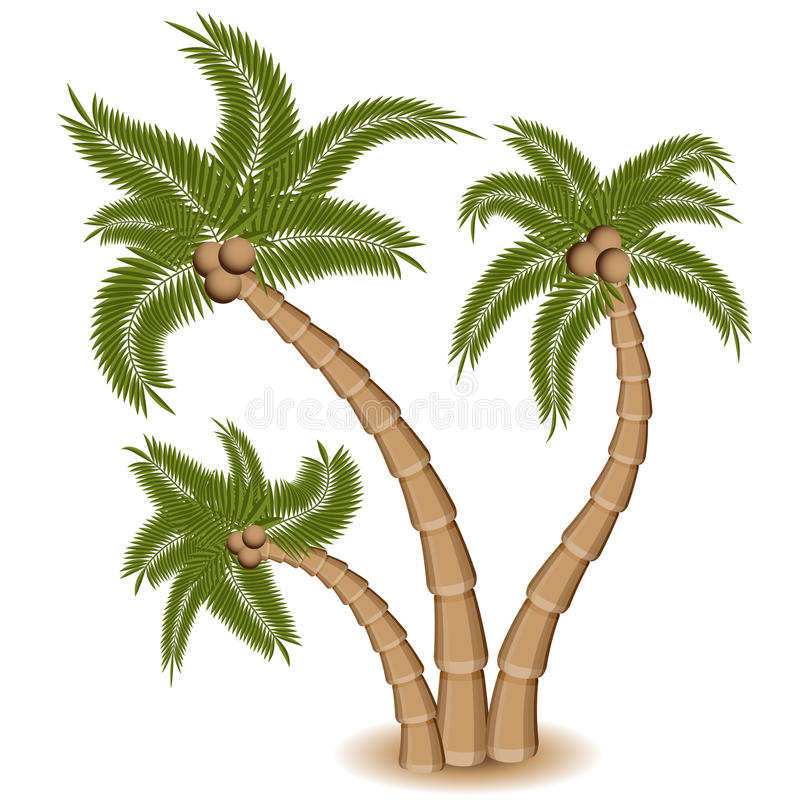 Tre gruppi della palma illustrazione vettoriale