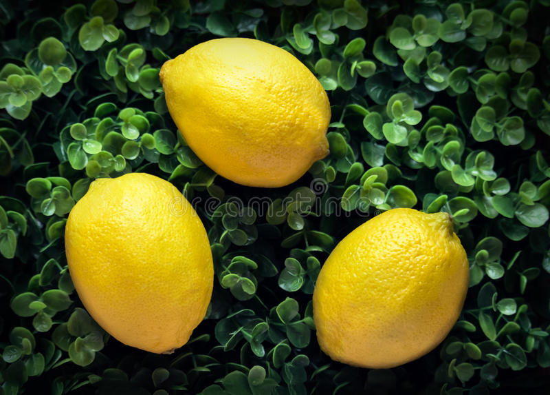 Tre gula citroner på en grön lövrik bakgrund arkivbilder
