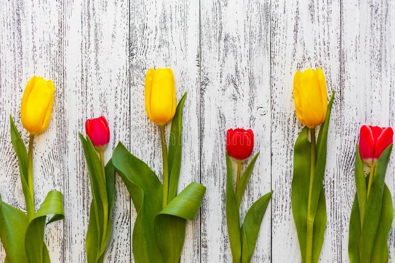 Tre gula och tre röda tulpan på en vit antik bakgrund för tappning fotografering för bildbyråer