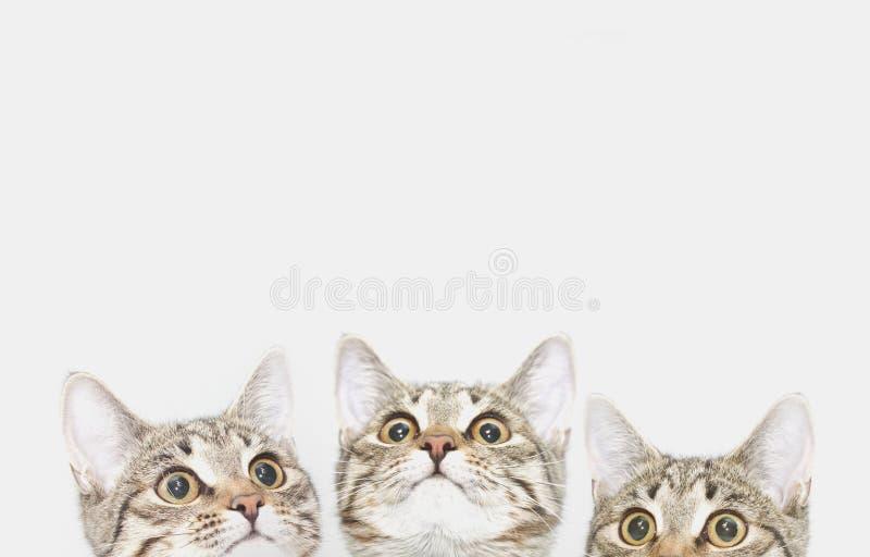 Tre gulliga kattungar väntar för att matas Kattframsidor som ser upp royaltyfria foton