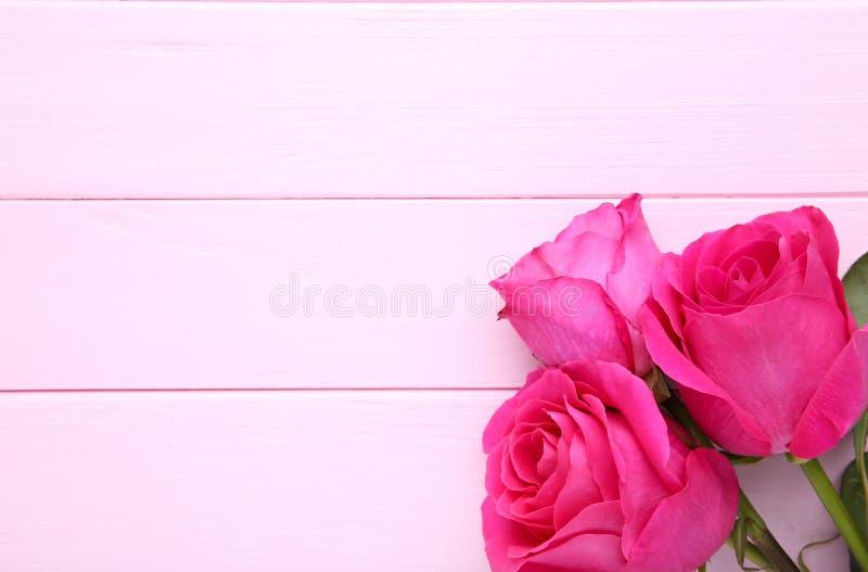 Tre härliga rosa rosor på rosa bakgrund arkivbild