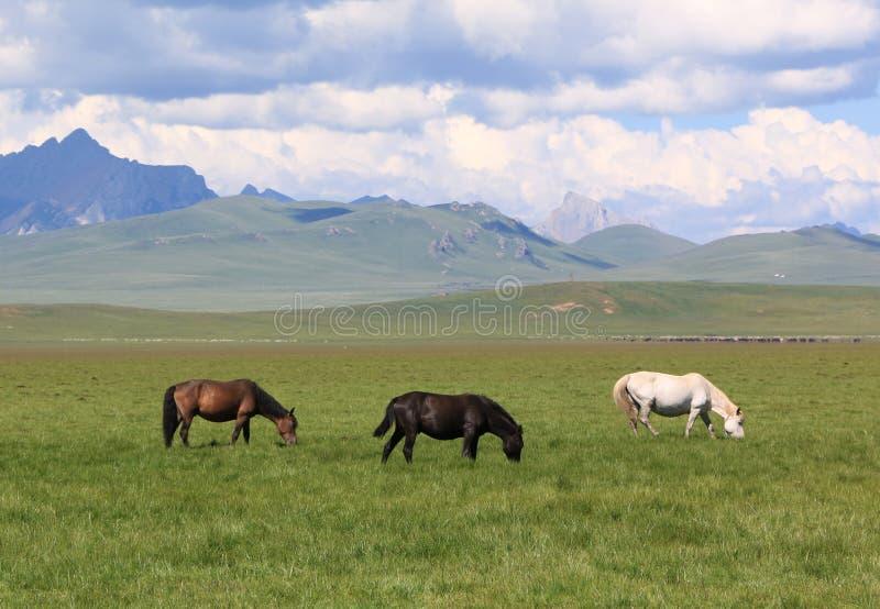 Tre hästar som äter gräs på gräsplanen, betar fältet royaltyfri fotografi