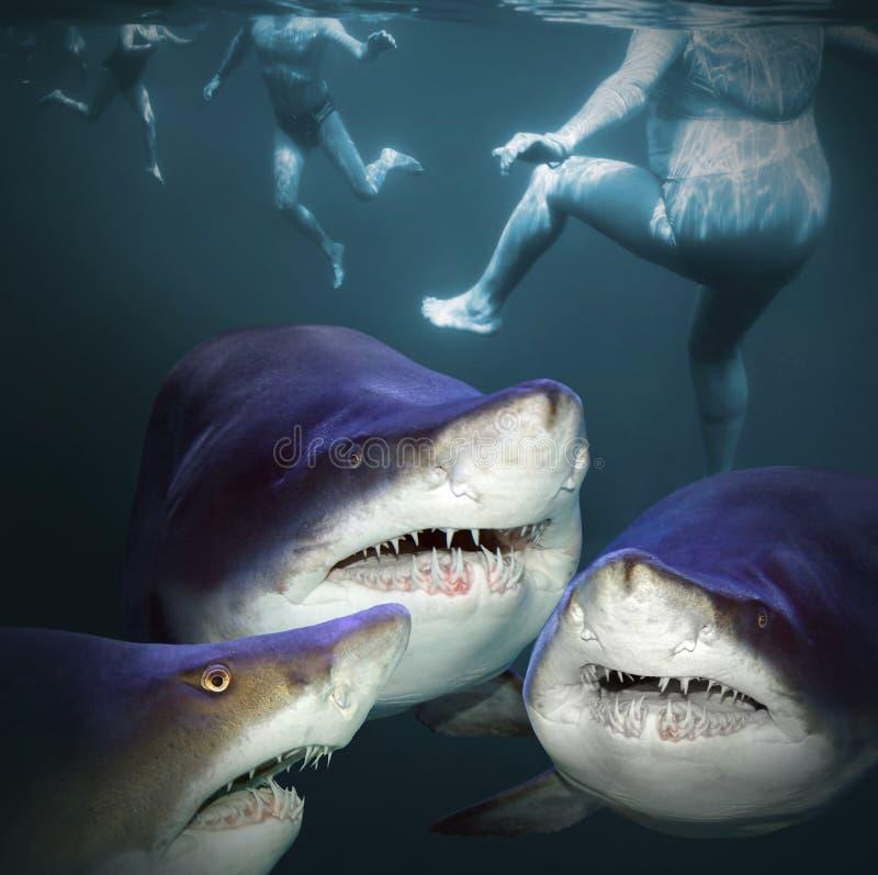 Tre hajar har en gyckel royaltyfri fotografi
