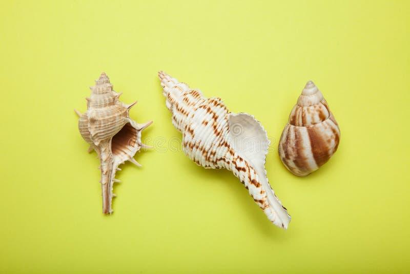 Tre havsskal isoleras på en gul bakgrund royaltyfri fotografi