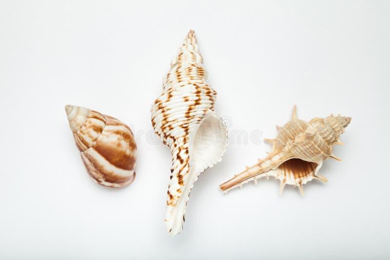 Tre havsskal på en vit bakgrund, begrepp av sommarsemestern arkivbild