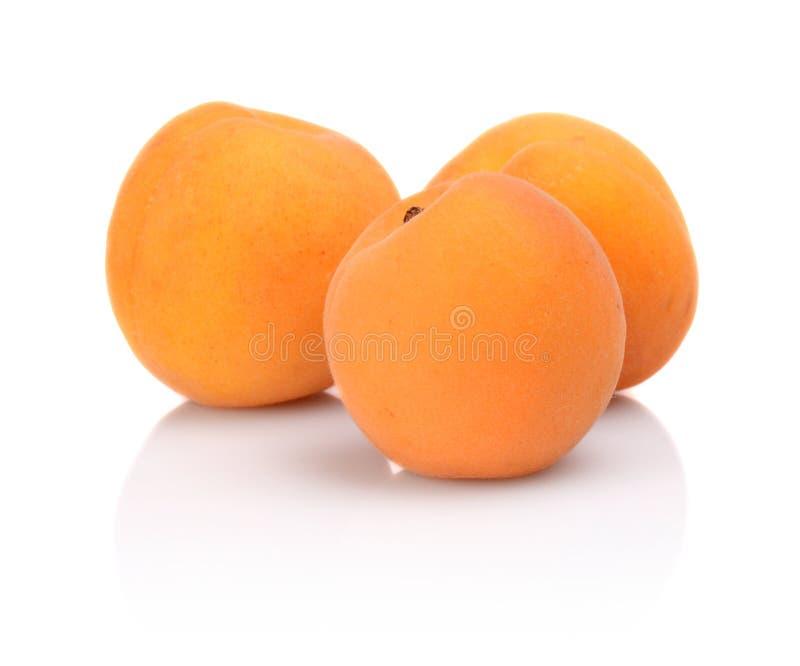 Tre hela aprikors på vit royaltyfria foton