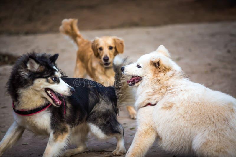 Tre hundkapplöpning av olika avel som spelar i en hund, parkerar royaltyfri bild