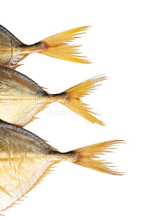 Tre isolerade fisksvansar royaltyfri foto