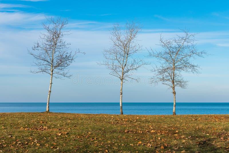 Tre kala träd längs kusten av Lake Michigan i Chicago royaltyfri fotografi
