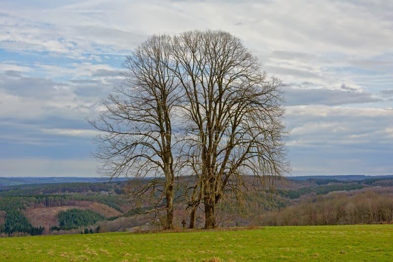 Tre kala vinterträd med ett litet stenkors in - between i ett molnigt Ardennes landskap royaltyfri foto