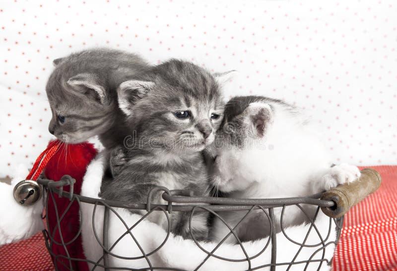 Tre katter behandla som ett barn royaltyfri fotografi