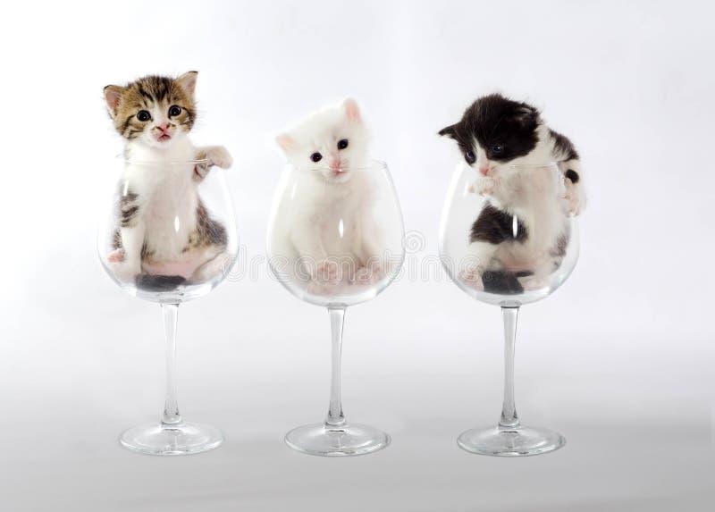Tre kattungar i vinexponeringsglas på en ljus bakgrund arkivbilder