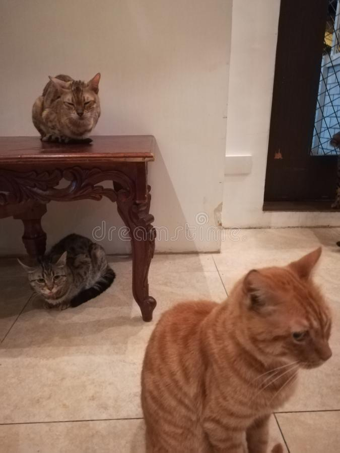 Tre kattvänner arkivfoton