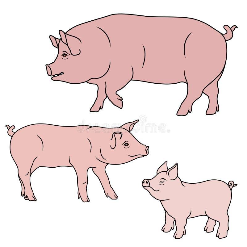 Tre maiali rosa illustrazione vettoriale