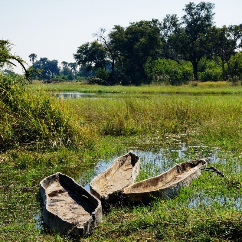 Tre makorodugoutkanoter, Okavango delta, Botswana royaltyfri fotografi