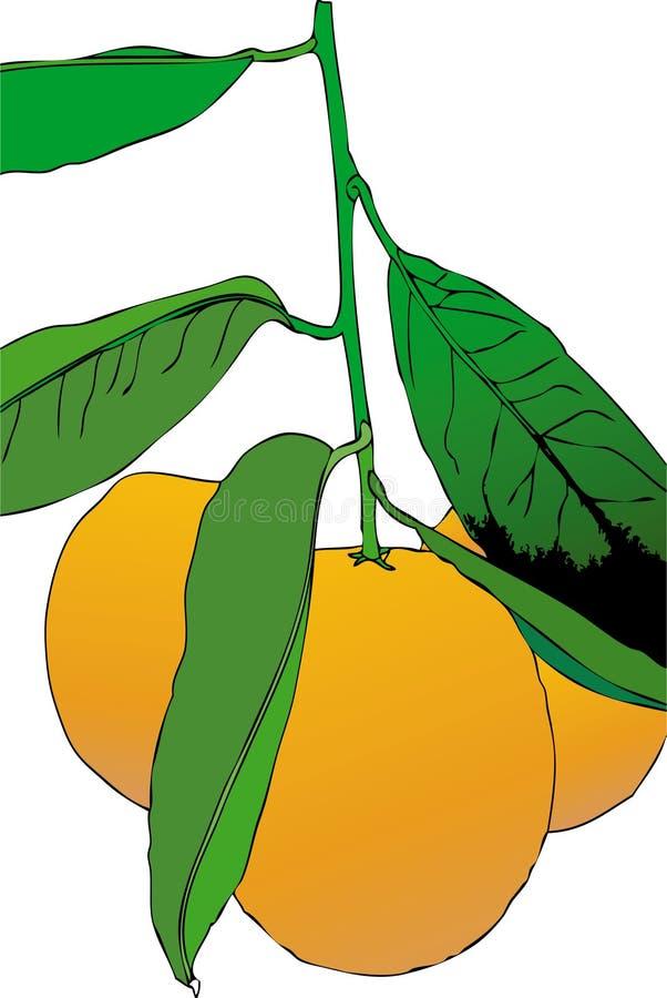 Tre mandarini illustrazione di stock