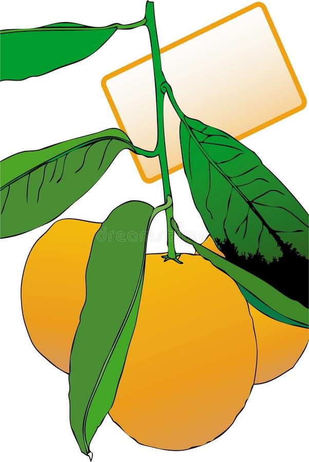 Tre mandarini con il vostro testo illustrazione di stock