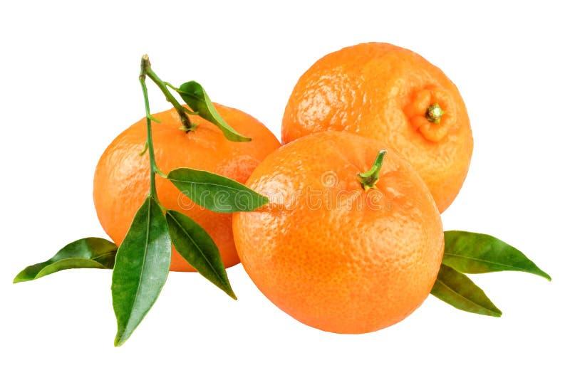 Tre mandarini si inverdiscono la foglia fotografia stock libera da diritti
