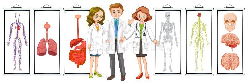 Tre medici e diagrammi sistema umani differenti illustrazione di stock