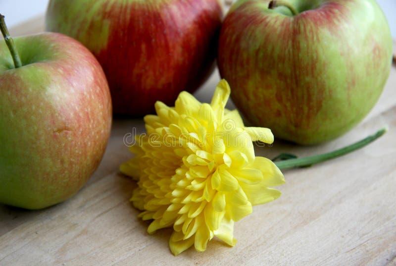 Tre mele e un crisantemo fotografia stock libera da diritti