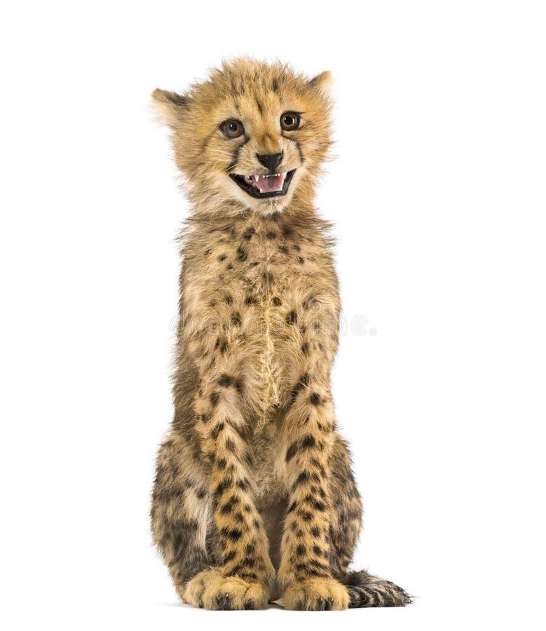Tre mesi del ghepardo di seduta del cucciolo, isolata fotografia stock