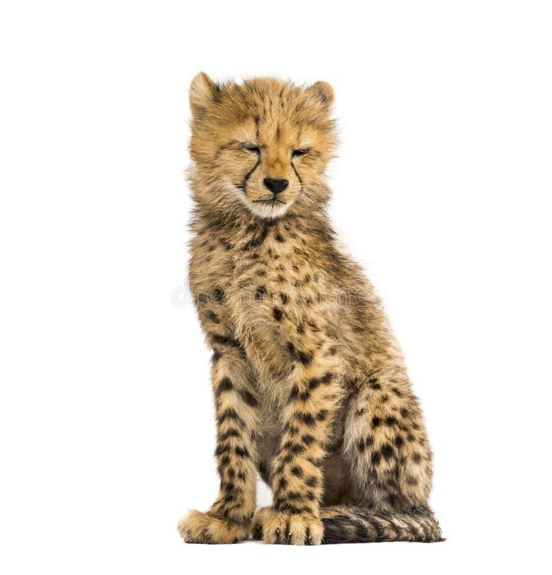 Tre mesi del ghepardo di seduta del cucciolo, isolata immagine stock