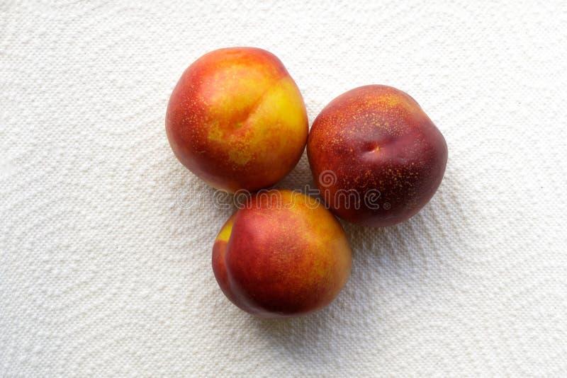 Tre mogna nektariner p? en vit bakgrund royaltyfri foto