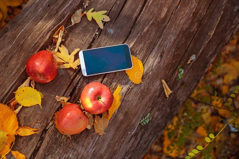Tre mogna röda äpplen och mobiltelefon ligger på ett gammalt träd autum arkivbilder