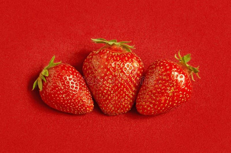 Tre nya jordgubbar på röd textilbakgrund royaltyfria foton