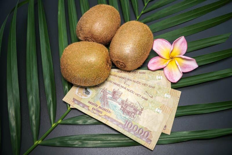 Tre nya rå exotiska tropiska Kiwi Fruits kallade också Kines Gooseberrys med vietnamesiska Dongs för nationell valuta royaltyfria foton