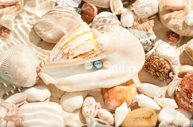 Tre pärlor i det undervattens- stora snäckskalet arkivbild