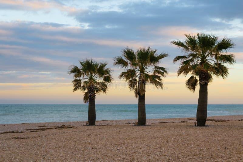 Tre palme sulla spiaggia immagine stock libera da diritti